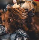 Mejores pipetas para perros