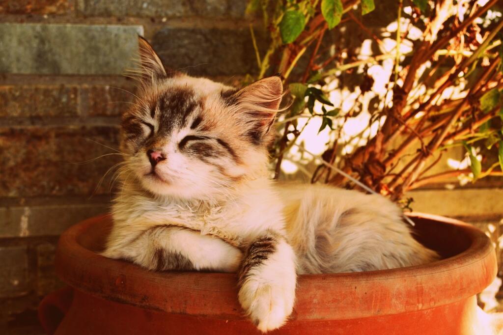 Cómo elegir mejor arena para gatos