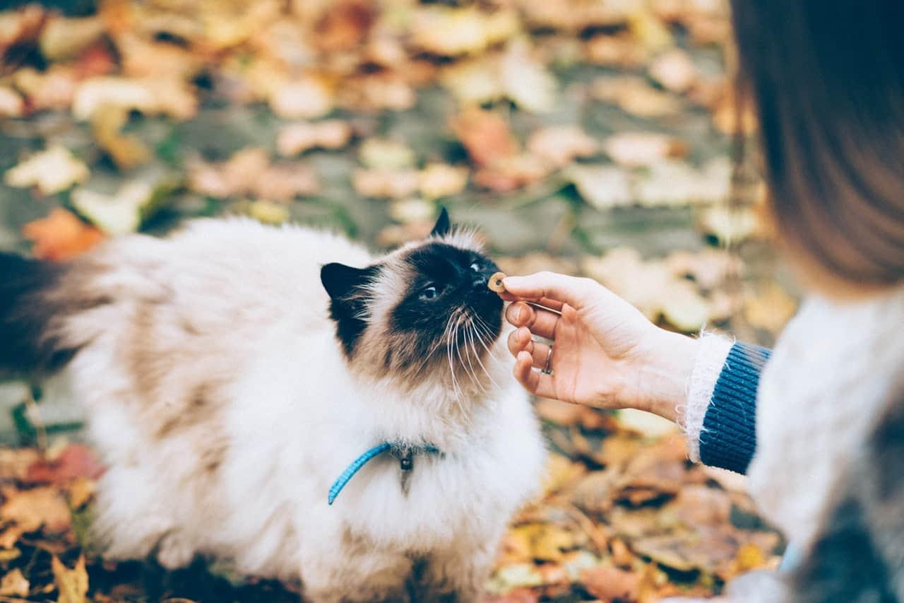 Mejor Pienso Para Gatos Ranking Top 15 Mejores Piensos Para Gatos