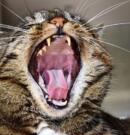Mejor pienso para gatos sin dientes